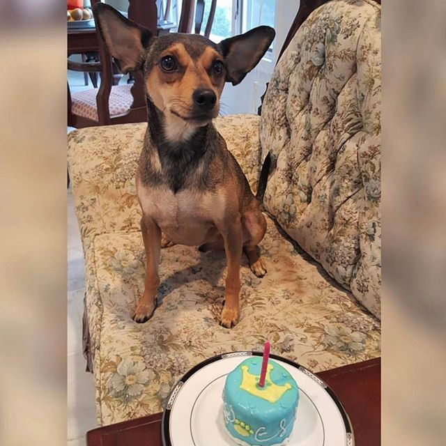 @specstreks celebrated a birthday with a cake from Gourmet Pup Club. We are glad your pooch enjoyed it. Get your own personalized doggy cake for your pooch's special event, visit gourmetpupclub.com for more information - @anseldiama