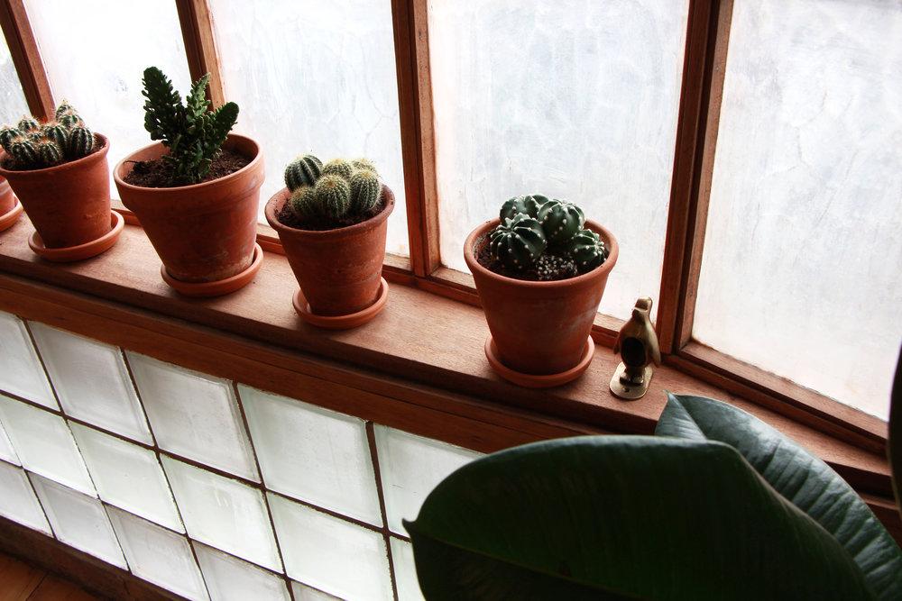 cactuspenguin.jpg