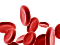 Blood Sugar regulation