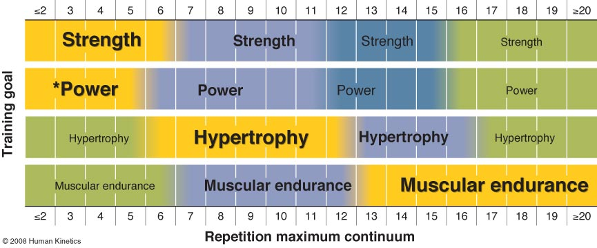 Image from Essentials of Strength Training and Conditioning, 2008; official textbook used by the National Strength & Conditioning Association (NSCA: www.nsca.com) for their CSCS certification
