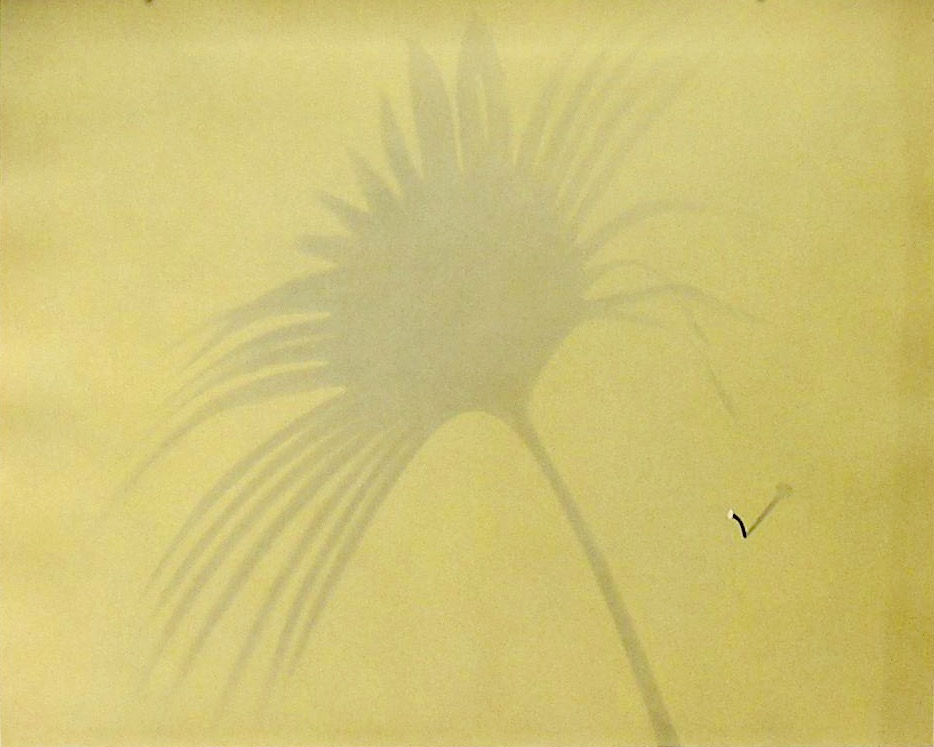 Untitled, 1981. Gouache on paper. Palmetto Leave Series  22 X 29""