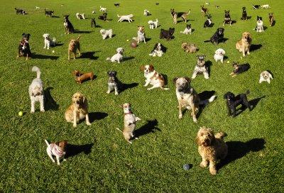 Friends of Dayton DOg Park -