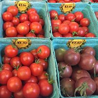 Tomatoes VG.jpg