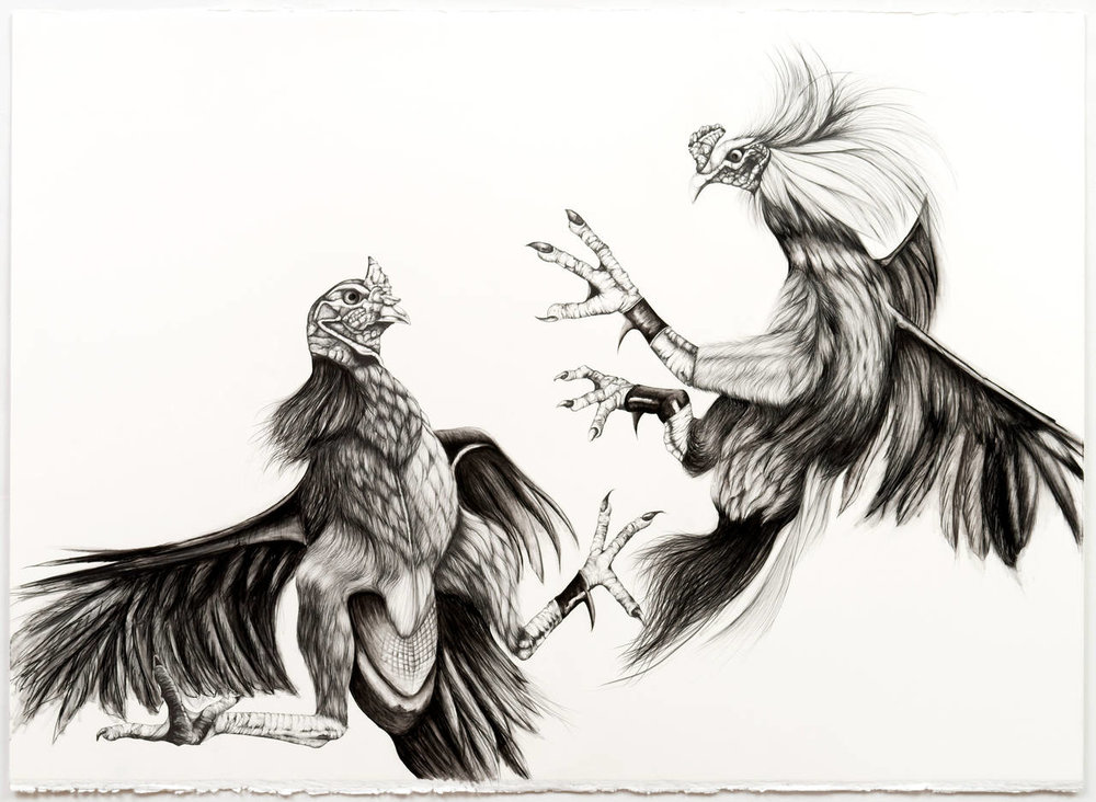 "Emily roz, ""Cockfight"" graphite and charcoal on paper, 30""x 40"""
