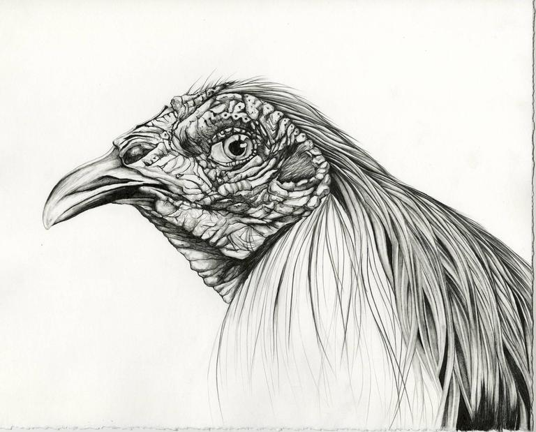 "Emily roz, ""Gamecock"" graphite on paper, 14""x15"""