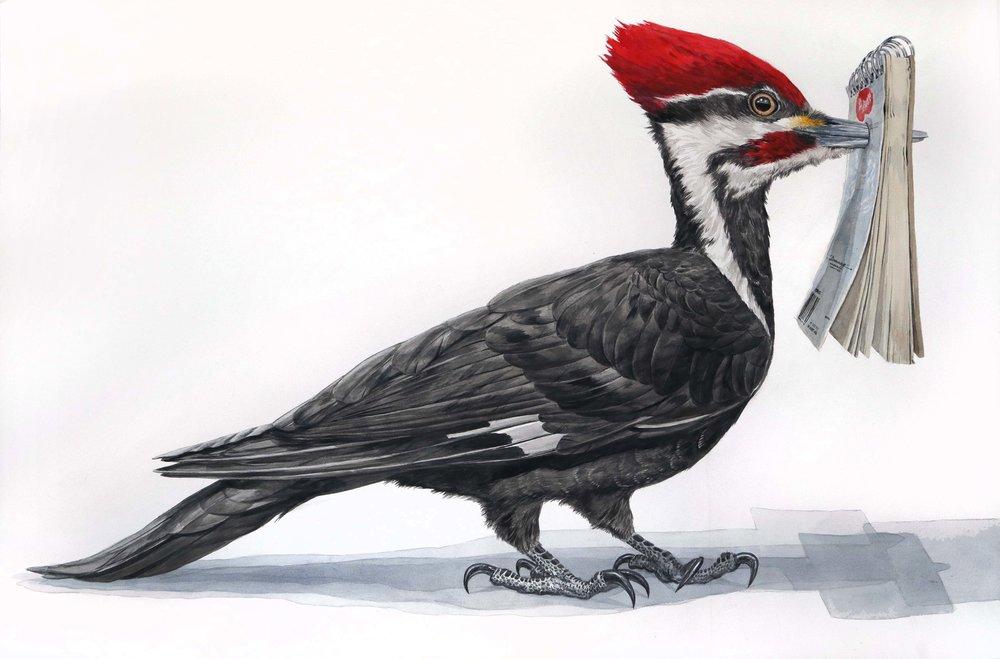 woodpecker sketchbook 40%22x60%22 2018 watercolor broadbent.jpg