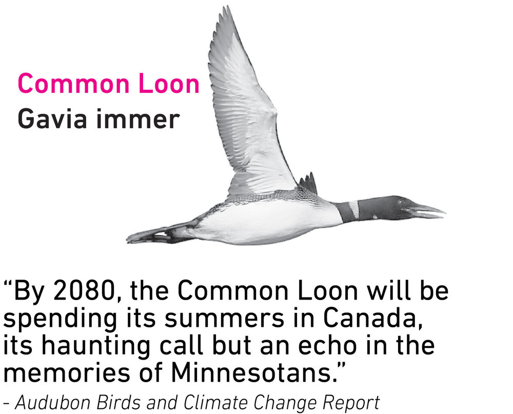 Common Loon.jpg