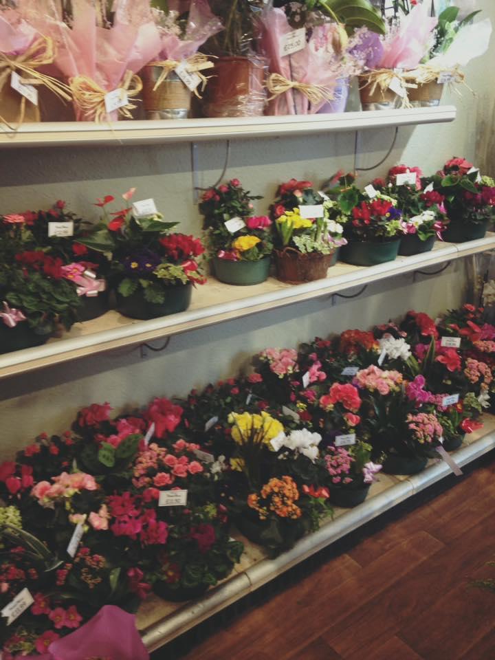 Rows of Flowers Inside Shop