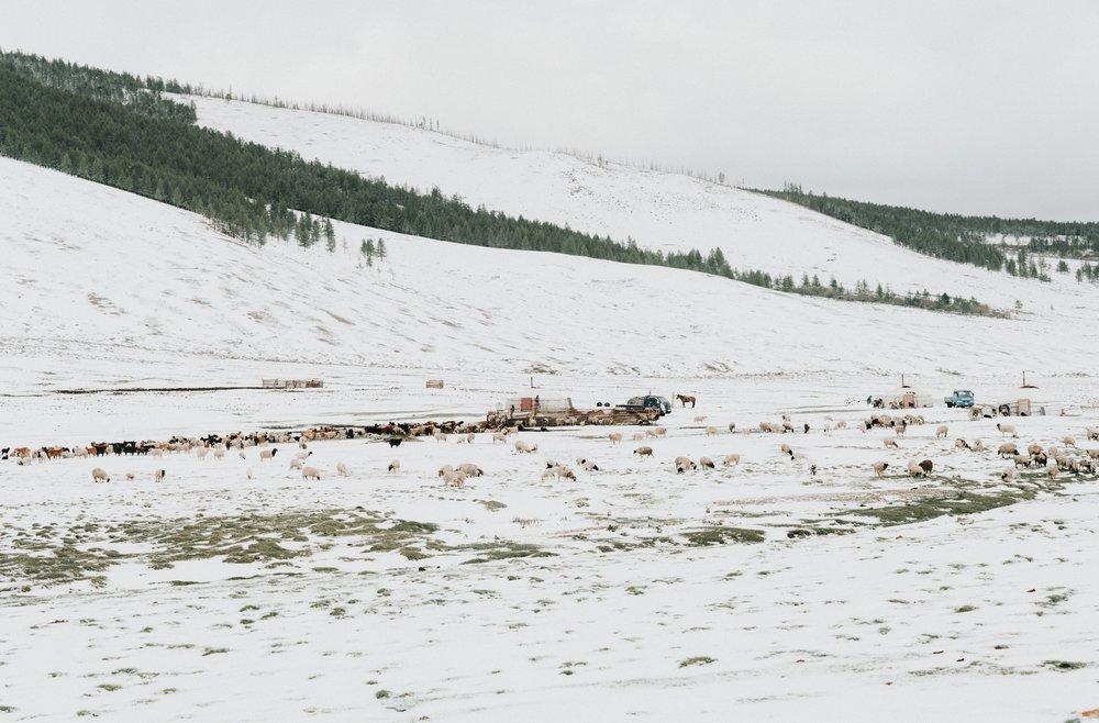 Mongolia_2018 (338 of 403) copy.jpg