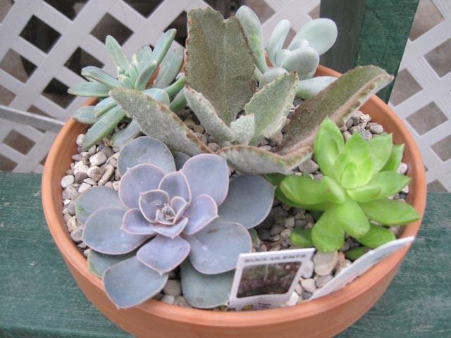 Succulent Garden — Lakewood Greenhouse