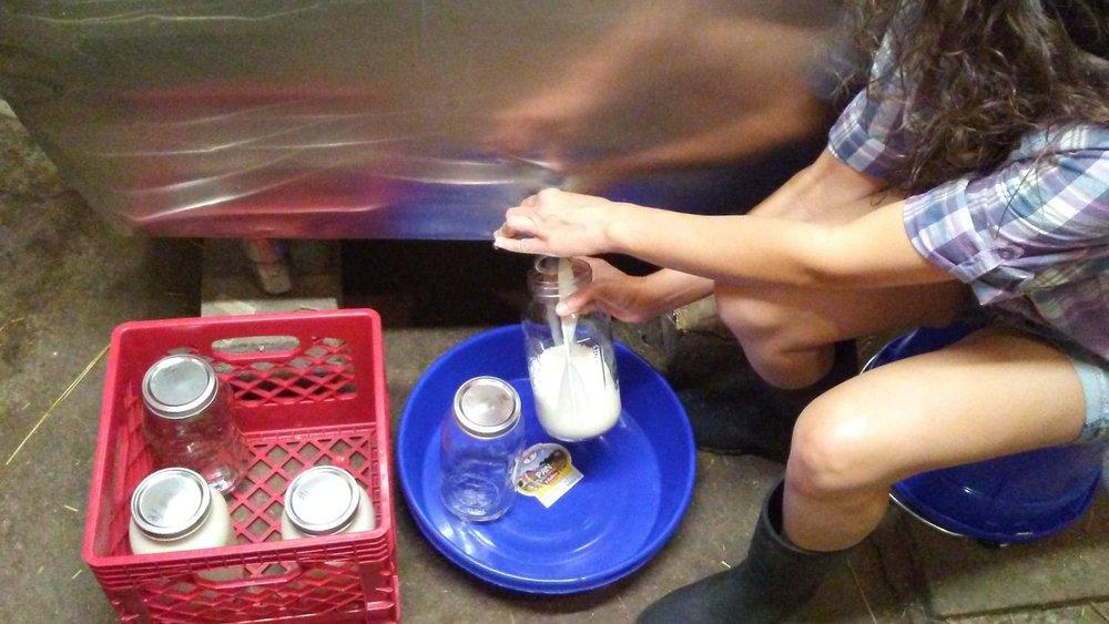 me bottling milk.jpg