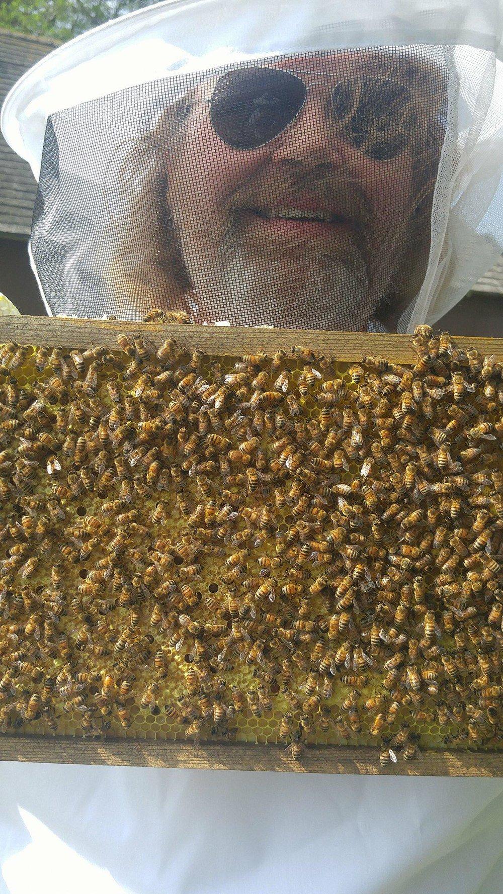 Scott n bees.jpg