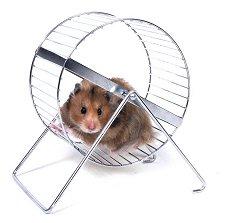 cute-hamster-hamster-wheel-10434221