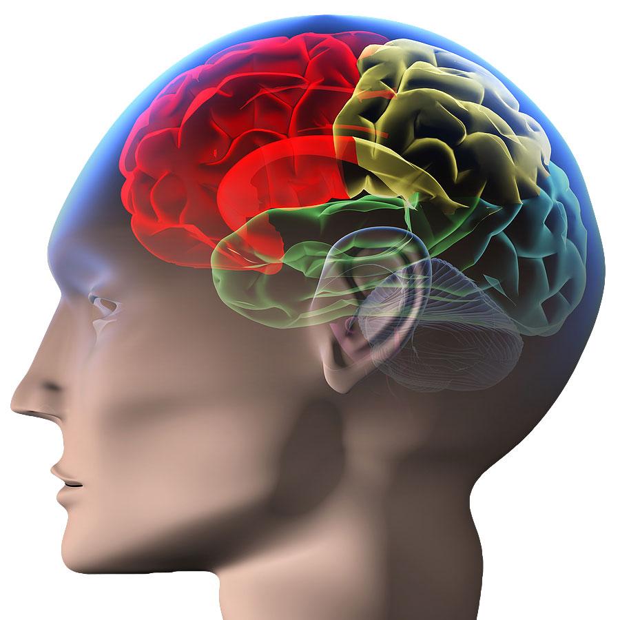brain-photo