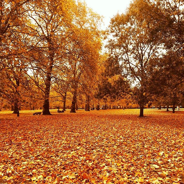 We love the colours of Autumn & the crunch of leaves underfoot 🍂