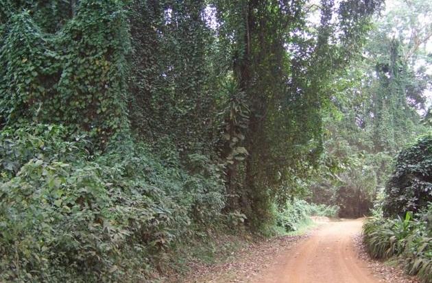 Entebbe_Botanical_Park