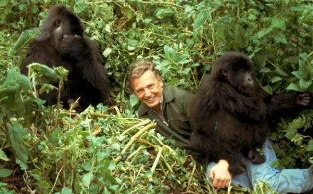 David Attenborough with mountain gorillas in Rwanda