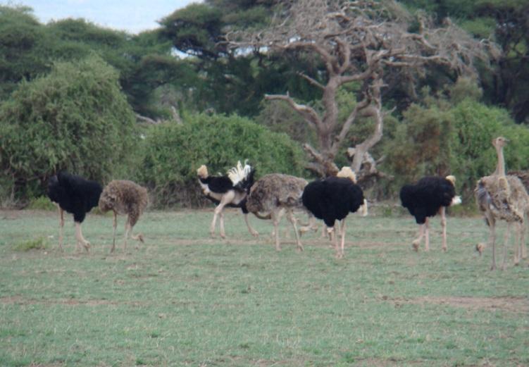 Amboselli_1.jpg
