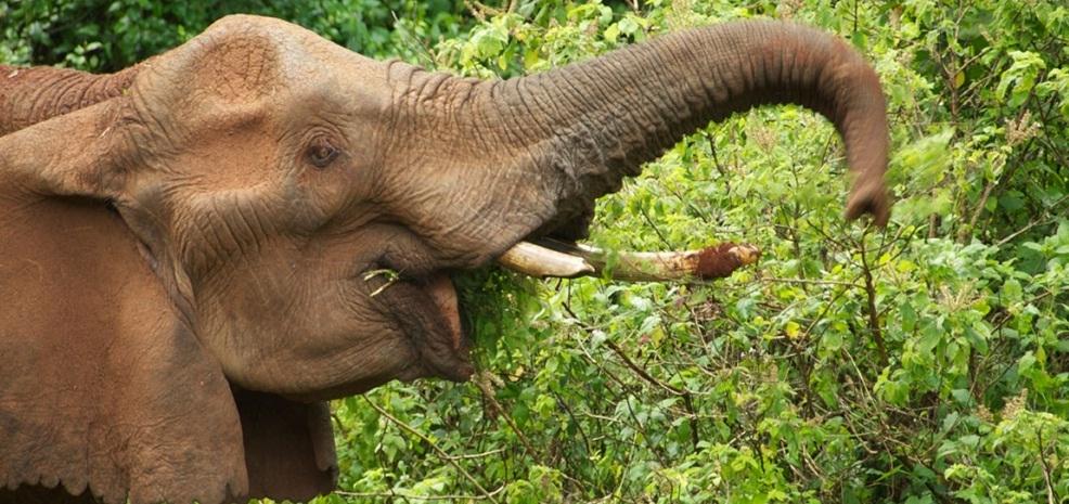 Aberdare_National_Park_Elephant