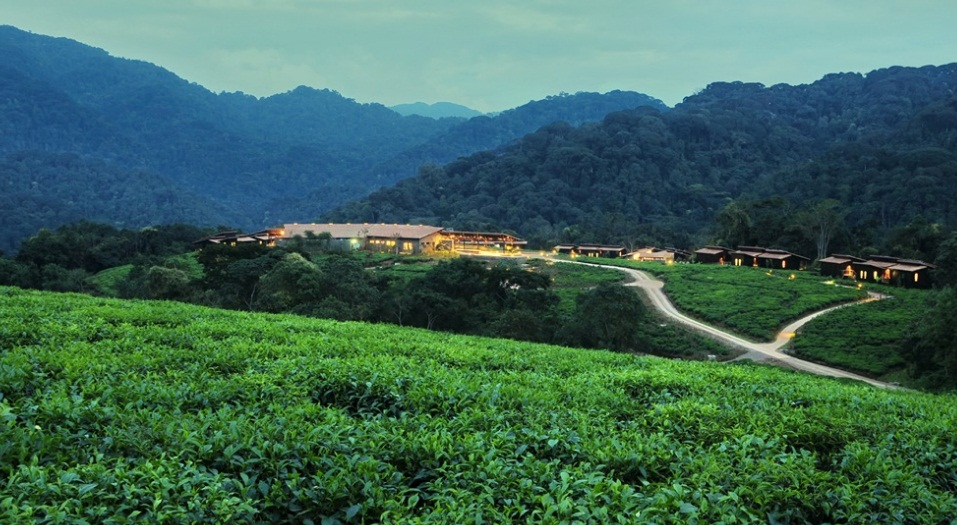 Nyungwe_Forest_Lodge