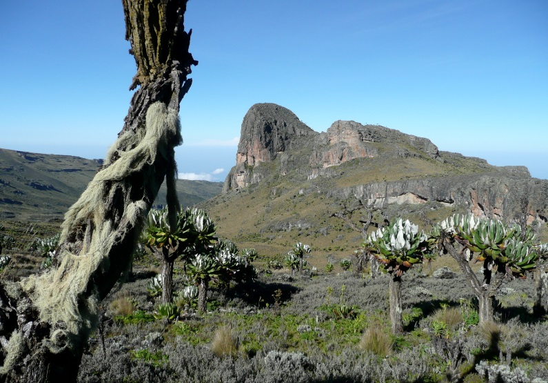 Mount_Elgon