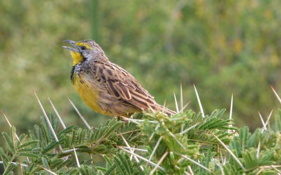 Birding_Semuliki