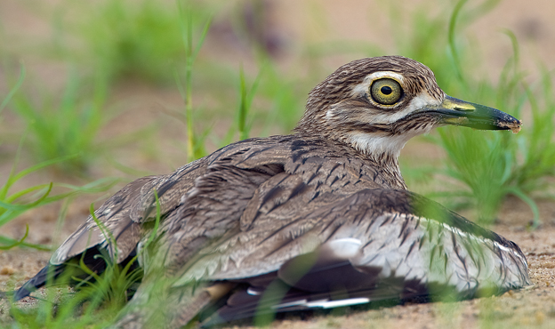 water thick knee.png