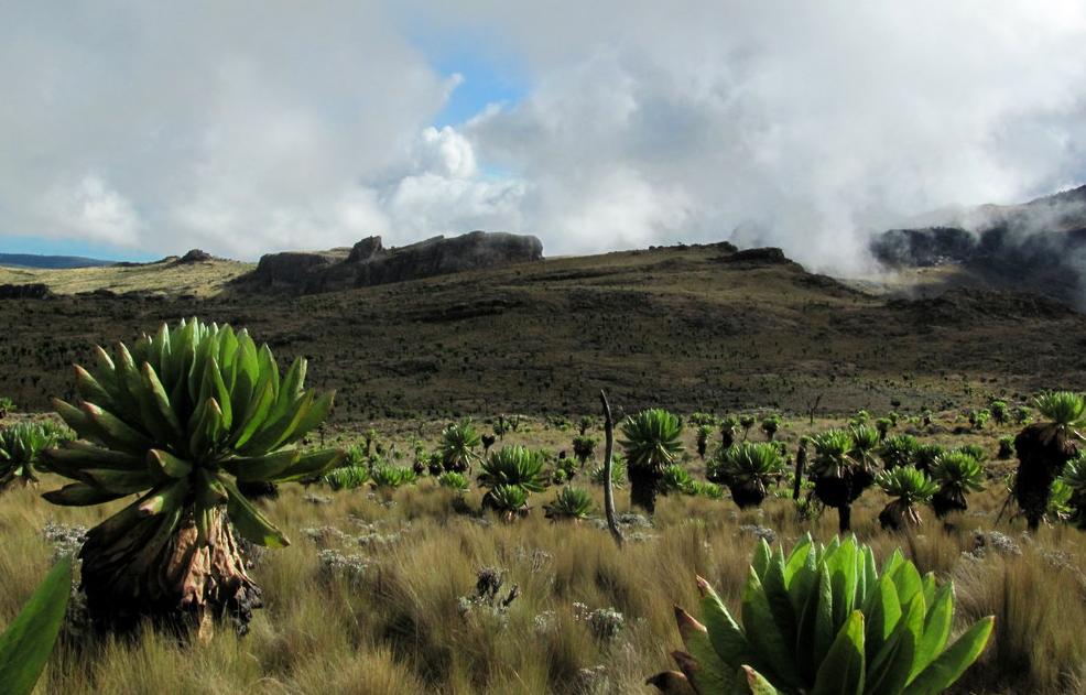 vegetation at mount elgon.png