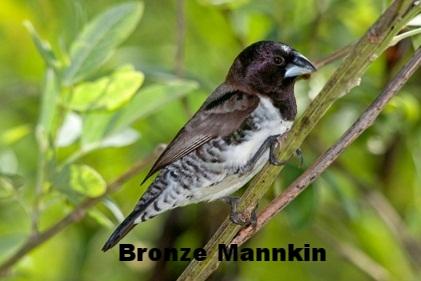 bronze mannkin.jpg