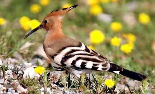 birding at mount elgon.jpg