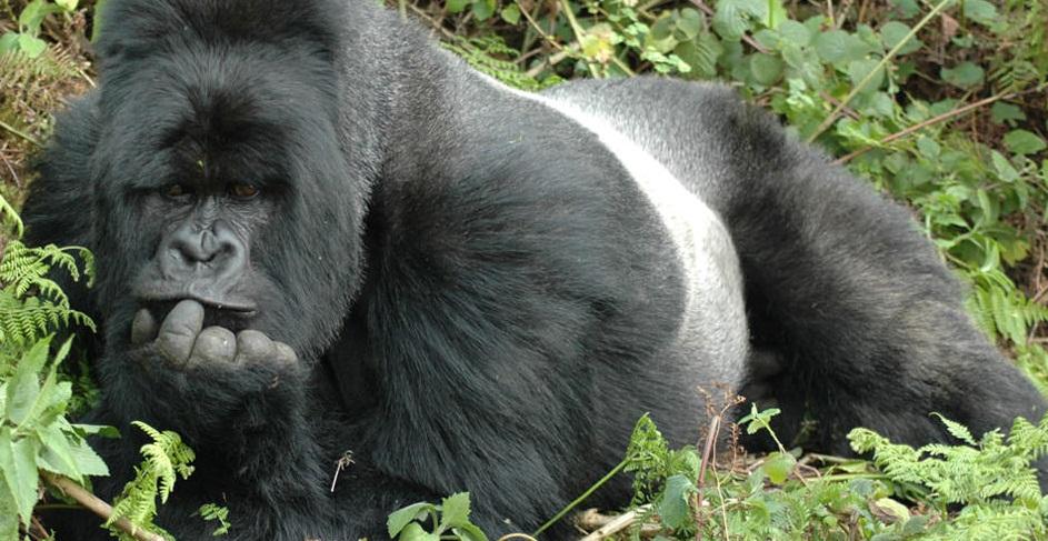 nkuringo gorilla lodge 7.jpg