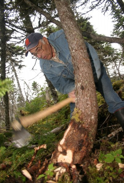 Cutting a grown timber. The curve of the tree keeps the strength of the grain.