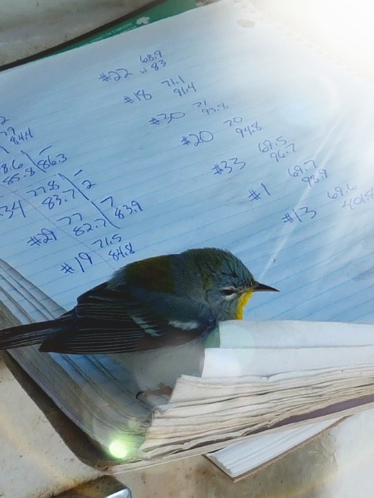 The little bird examines where Charlie dumps his traps. (KATE BOYD Photo)