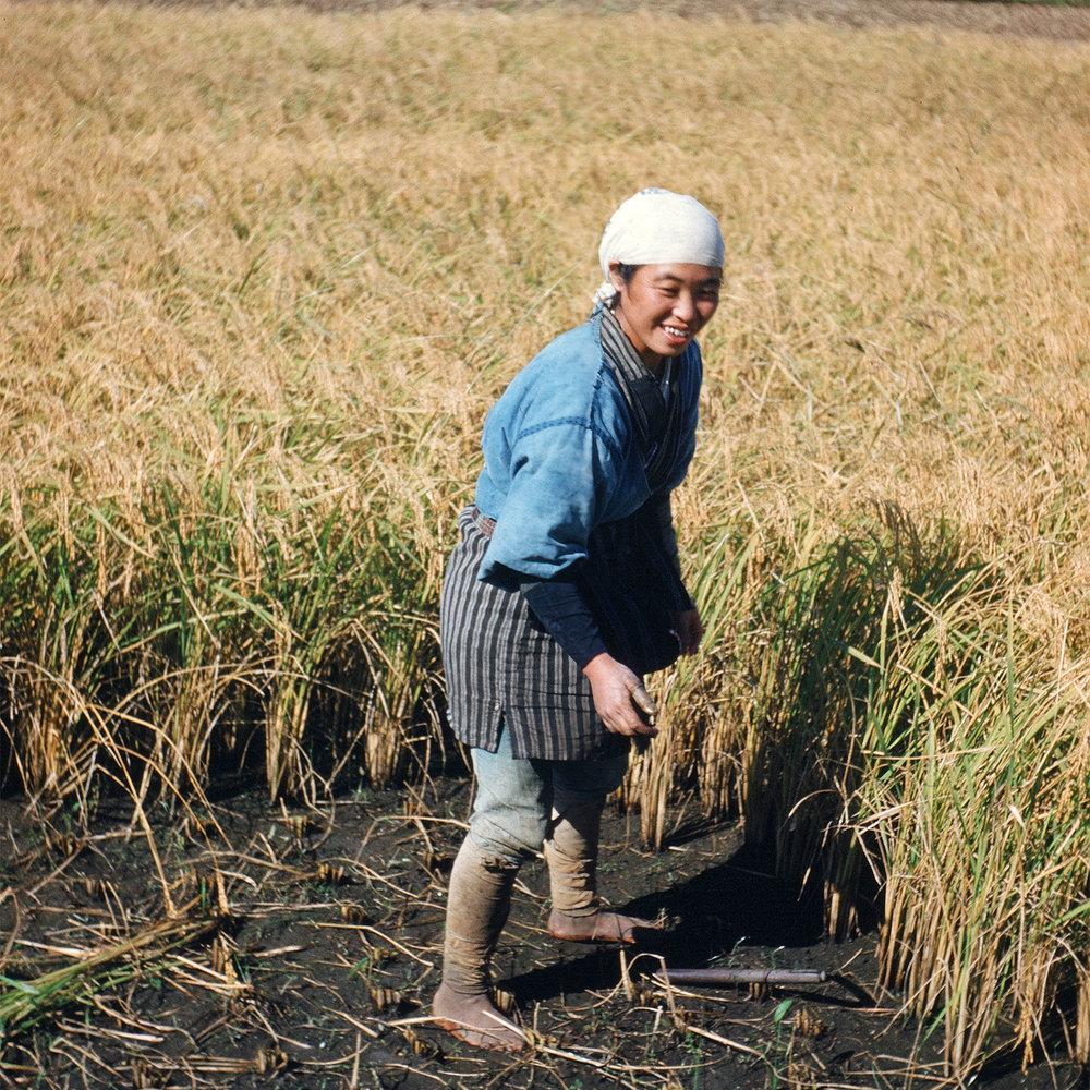 67-Rice22.jpg
