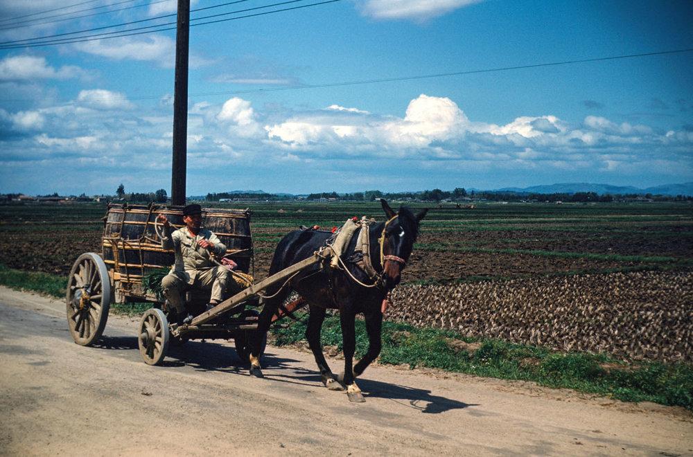 205- Horse Cart