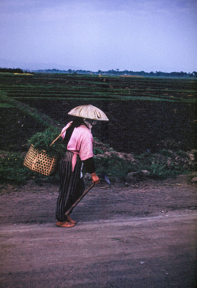 292-Woman Walking near Fields