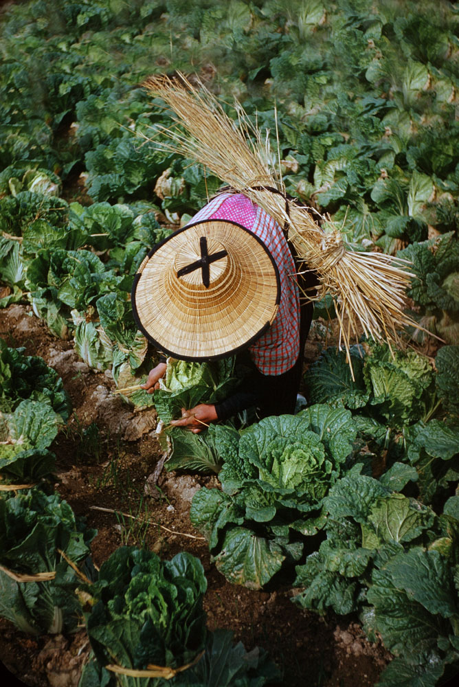 73- Woman Tending Vegetables