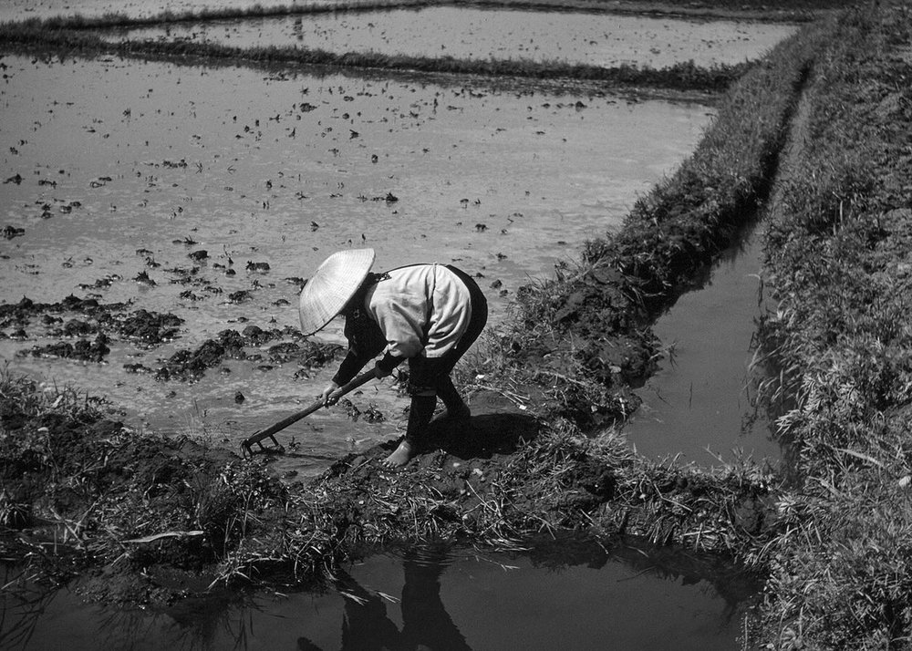 58-Tending Rice Field