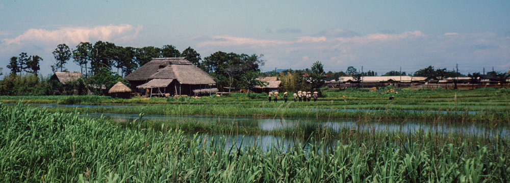 324- Farm and Distant Farmers in Rice Field