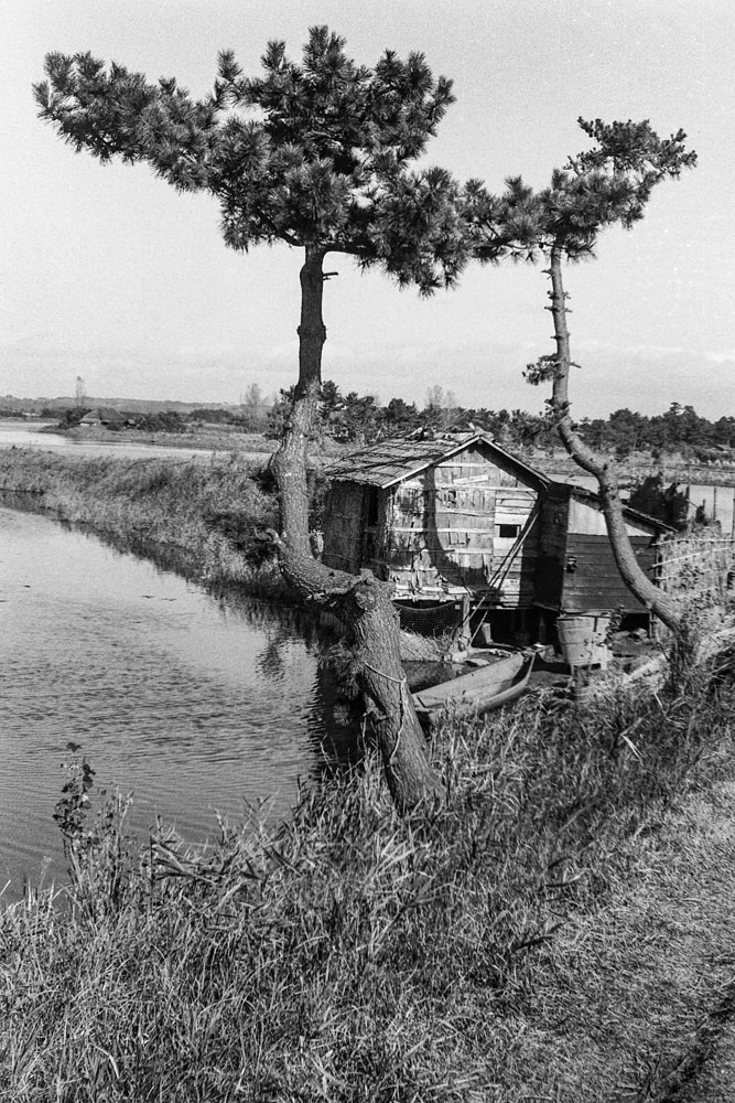 326- Kitakami Canal, Pine Tree and Small Building