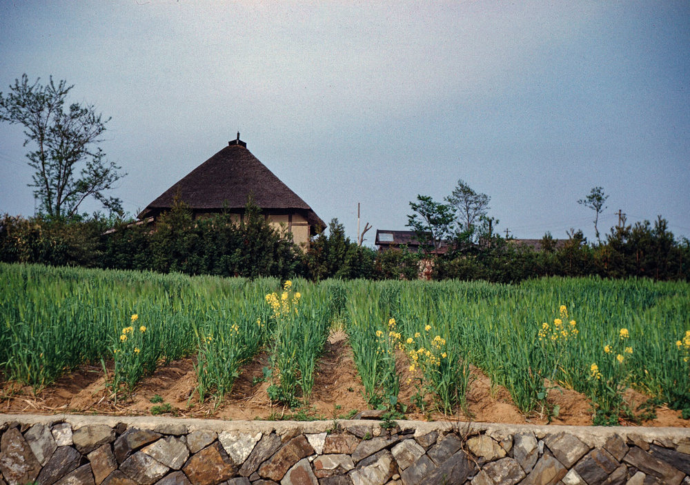 453- Farmhouse with Blooming Fields in Foreground