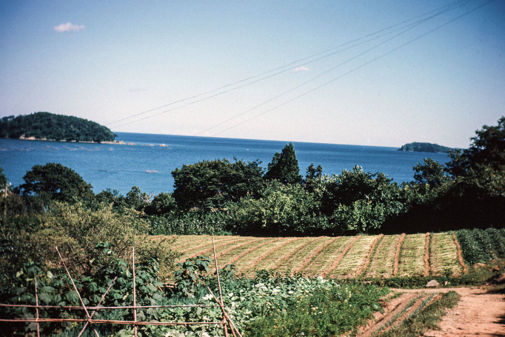 514- Fields with Sea Beyond