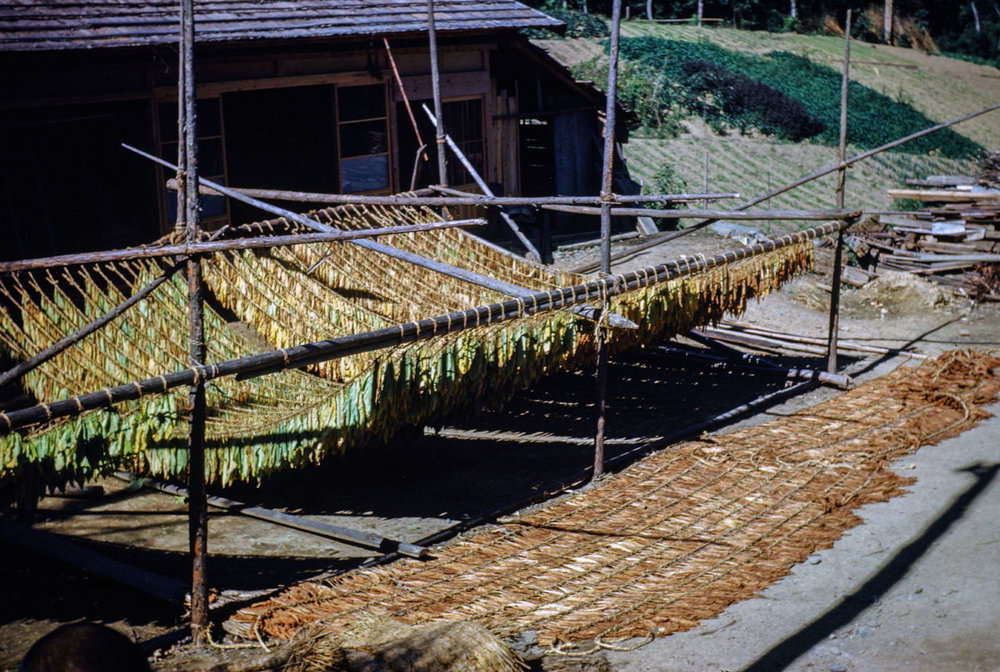 509- Racks for Drying Tobacco