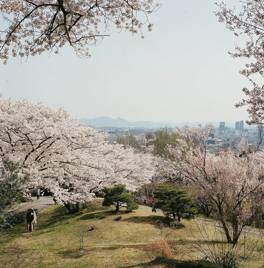 Handayama Botanical Garden, Okayama