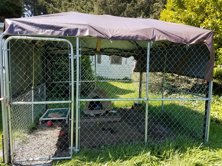 One of Del Norte County Animal Control shelter's several high quality 10'x10' kennels donated by volunteers.