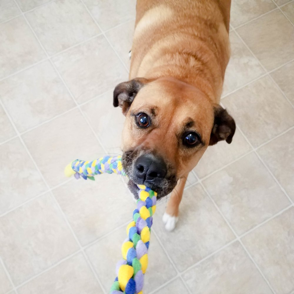 Fleece Square Knot Dog Tug Toy: Loves It