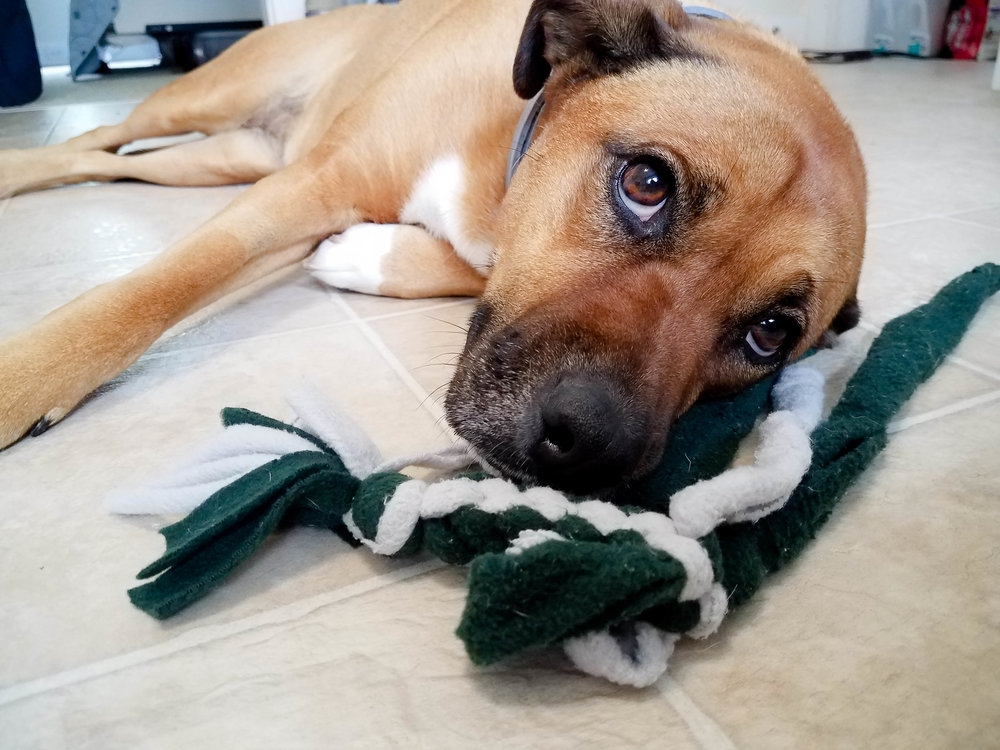 Fleece Square Knot Dog Tug Toy: Torn Toy