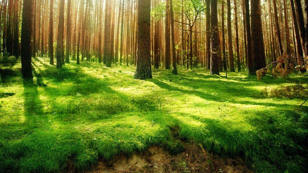 Nature-View.jpg