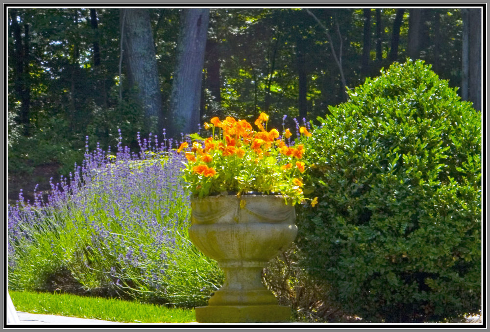 Classic plantings with urns