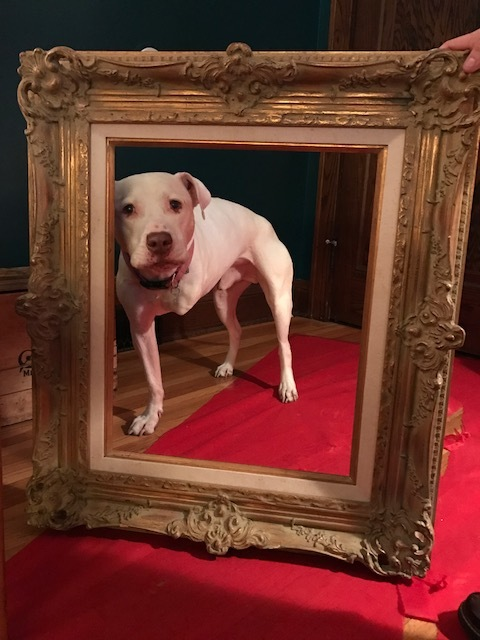 A three-legged dog in a picture frame is like... is like.... Actually, there is no comparison!